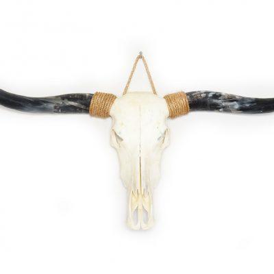 Longhorn schedel C