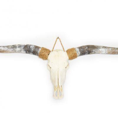 Longhorn schedel