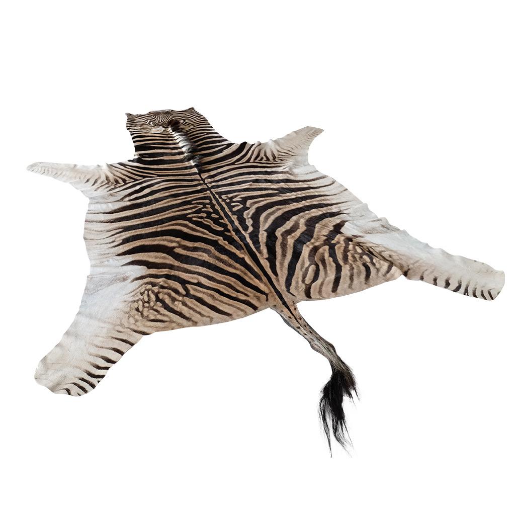 Zebrahuid origineel Afrika Klasse I