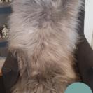 IJslandse schapenvacht grijs