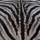 Zebrahuid echt