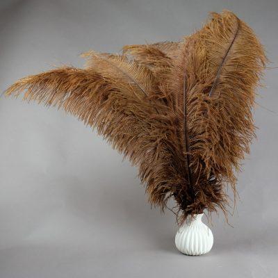 Bruine struisvogelveren