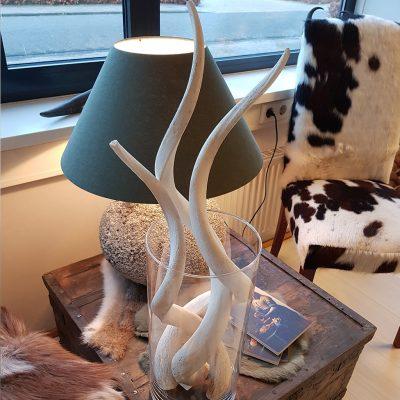 kudu hoorns in een vaas