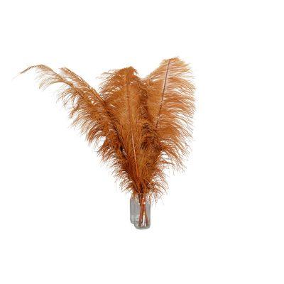 bruine struisvogel veren