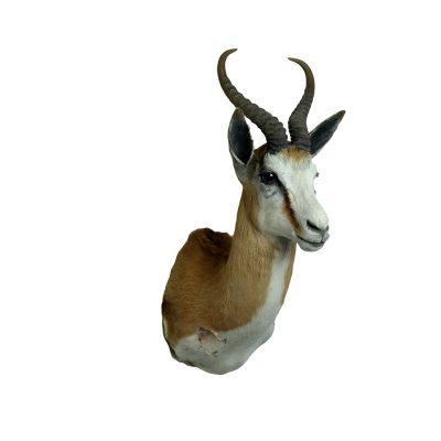 springbok shouldermount